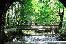 Bridge at Goldstream Park